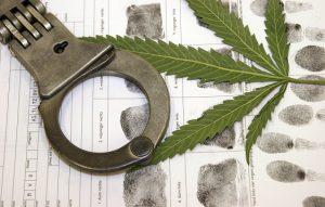 עורך דין פלילי גידול סמים